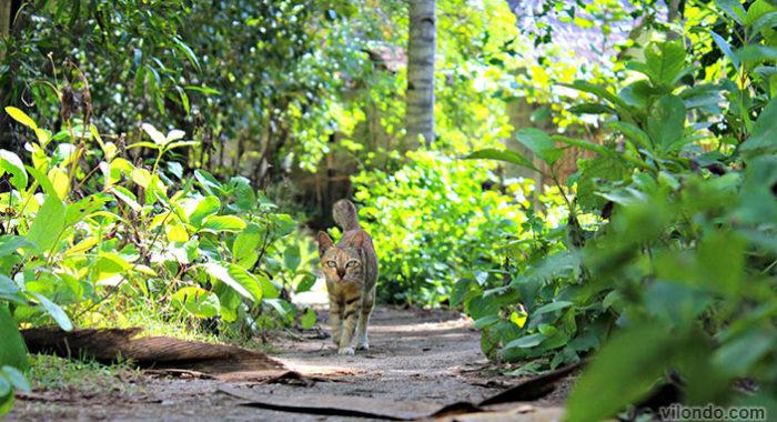 Gili Air Cat
