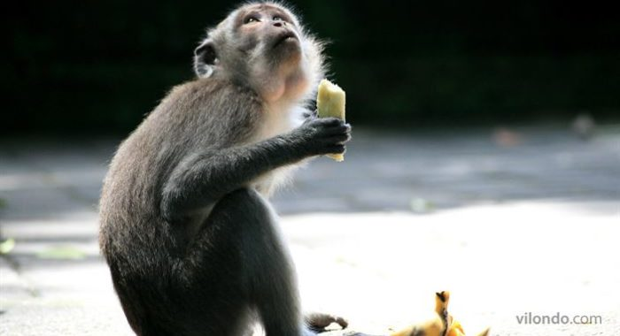Ubud Monkey Forrest