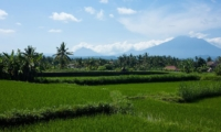 Rice Fields - Puri Nirwana - Gianyar, Bali