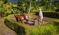 Fields View - Seseh Beach Villa 2 - Seseh, Bali