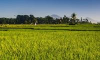 Rice Fields - Seseh Beach Villa 2 - Seseh, Bali