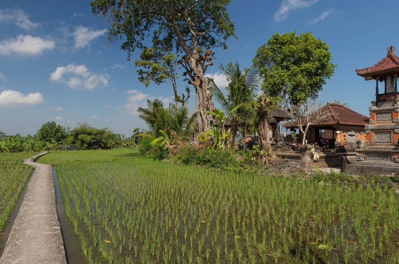 Pathway to the Fields - Seseh Beach Villa 2 - Seseh, Bali