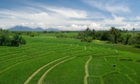 Rice Fields - Shalima Cantik - Seseh, Bali