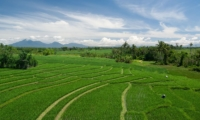 Rice Fields - Shalima Makanda - Seseh, Bali