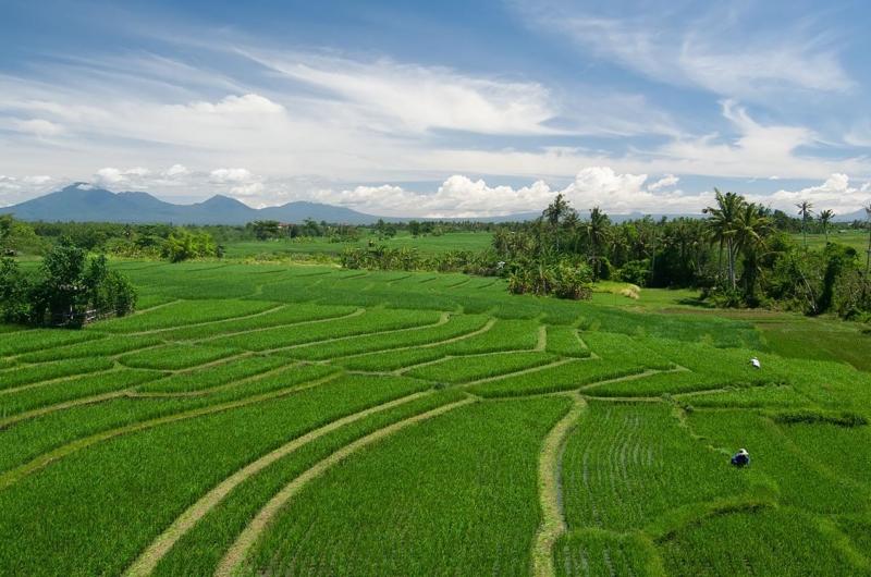 View - Shalimar Villas - Seseh, Bali