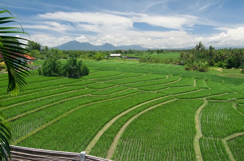 Rice Fields - Shalimar Villas - Seseh, Bali