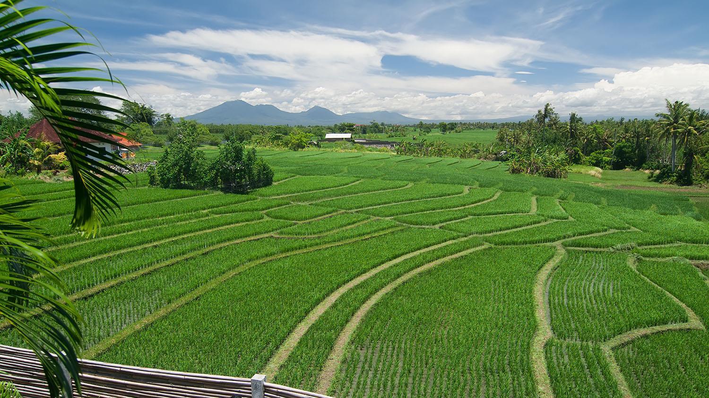 Výsledek obrázku pro shalimar pakistan rice