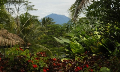 Gardens - Villa Bayad - Ubud, Bali