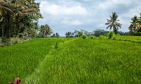 Rice Fields - Villa Cemadik - Ubud, Bali