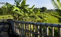 Pathway - Villa Levi - Canggu, Bali