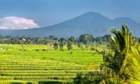 Rice Fields - Villa Mana - Canggu, Bali