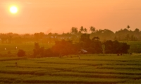 Fields View - Villa Mana - Canggu, Bali