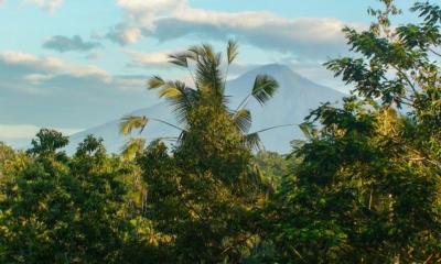 Gardens - Villa Vastu - Ubud, Bali