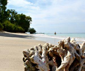 Coral Gili Air