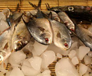 Gili Trawangan Fish On Ice