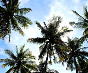 Palms Gili Air