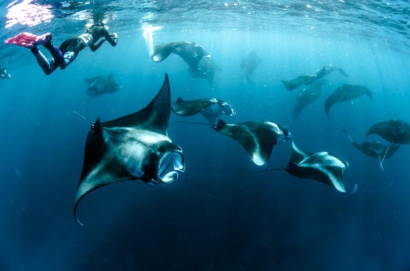 Manta Rays Snorkelling | Nusa Lembongan, Indonesia